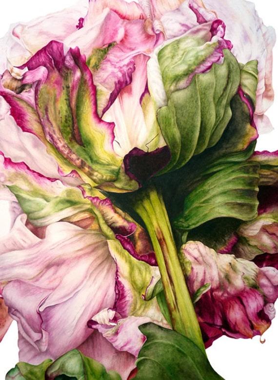 Peony II - fine art botanical print, 11 x 8 in, botanical watercolor, peony, botanical print