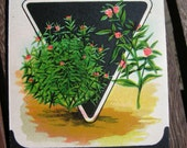 Unused stock seed packets, vintage prints, lithographic art, illustrative art