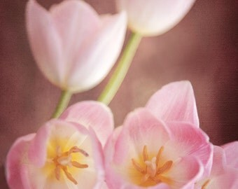"Pink Tulips, Spring Flowers, Easter Flowers, Botanical, ""Reaching"""