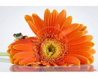 Orange Flower, Baby Frog Photo, Gerber Daisy Art