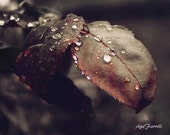 Leaf Art, Rustic Print, Black White Red Art, Nature Photography, Wall Art, Autumn Farmhouse Decor, Rain Print - Silver Swing