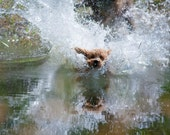 Dog Photography: The Art of the Acrobats No. 2