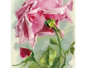 Roses Fabric Block - Pink Rose 1 - Repro Catherine Klein Image
