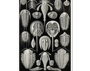 Preshistoric Crab Print, Horseshoe Crab Poster, Ernst Haeckel Scientific Illustration, Educational Art, Wall Art, Black and White Wall Art