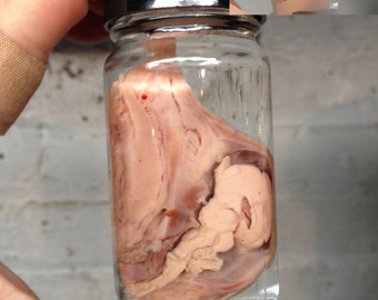 SALE Small Cross-Sectioned Pig Head in a Jar - NSFW Preserved Wet Specimen Taxidermy