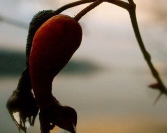 Nature Photography, Water Drop, Red, Sunset, Dusk, Twilight, Macro, Pacific Northwest, fPOE, Together