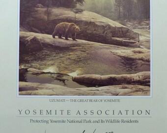 Uzumati - The Great Bear of Yosemite, Stephen Lyman Poster