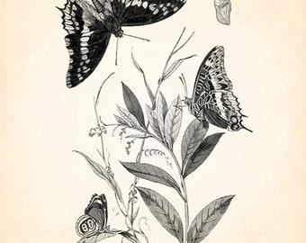 Butterfly Moth Cocoon Chrysalis Vintage Printable Image INSTANT Download Digital Antique Clip Art Transfer Art Print jpg jpeg pdf png V34