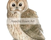 Digital Download Print - Tawny Owl Illustration, A4, print at home