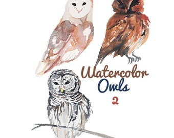 Watercolor Painted Bird Owl Clip Art Owls Commercial use digital scrapbooking Owl clipart instant download