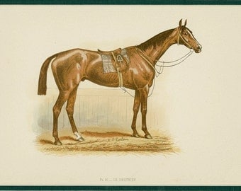 """1890 Race Horse Antique Print - Thoroughbred Stallion, Horse Racing, Riding - Gift for an Equestrian - Equine Art, Matted 16x13"""""""