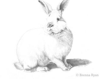 Custom Pet Portrait in Pencil (9 x 12)