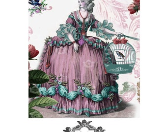 The Birdcage, French, Birdcage, Vintage,roses, Wickedly Lovely, Marie Antoinette inspired blank greeting card.