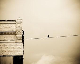Bird on a Wire. Fine Art Photography. Home Decor. Wall Art. Rural America. Main Street. Bird on a Wire.
