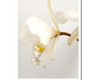 Flower Photography Vanilla Caramel Orchid Oversize Print Archival Yellow Gray