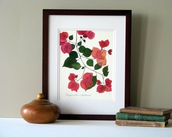 Pressed flowers print, 11x14 double matted, Pink Bougainvillea plant,  botanical wall decor no. 009