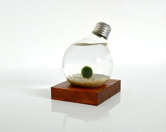 Marimo Ball Light Bulb Aquarium with Real Wood Base / Real Wood Home Decor, Real Wood Art Work, Pine Wood Table Decor, Upcycled Wood Decor