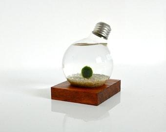 Marimo Ball Light Bulb Aquarium with Real Wood Base / Real Wood Home Decor, Real Wood Art Work, Pine Wood Table Decor, Upcycled Wood Decor