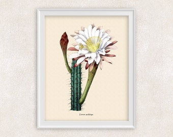 Cactus BOTANICAL ART - 8x10 PRINT White Flower Cacti - Desert Theme Home Decor - Wall Art - Item #110