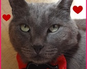 Mustache Love - Valentine's Day - Glitter Felt Holiday Bow Tie - Pet Fashion - NeckWear Accessory - ( Red ) - Premade - READY TO SHIP