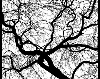 Tree Silhouette, Japanese Maple, Tree Photography, winter tree, Bare tree Photograph print