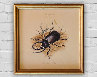 Vintage Print Scarab beetle, An Epitome of the Natural History of the Insects of India by Edward Donovan, London, 1800. 8'x8' (20x20cm)