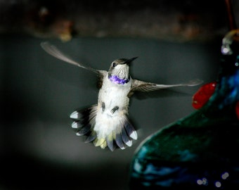Hummingbird photo by boydsphoto