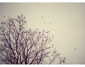 Bird Photography - Nature Photograph - Fine Art Photography - Wild at Heart - Birds - Trees - Winter - Landscape Photograph - Bird Art