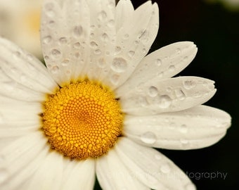daisy photography, flower photograph, white home decor, nature photography, spring decor, white flower, yellow decor, waterdrops