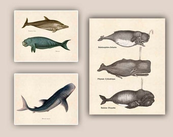 Marine Mammals prints, Whales Print, whale shark, dolphin, school Wall Decor, educational, Nautical art, beach cottage decor,