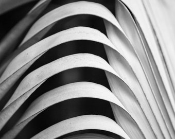 Dried Palm Leaf, Florida -- Black and White Photograph
