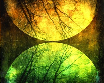 CLEARANCE Abstract Celestial Photo, Surreal Nature Art. Trees, Black, Green, 5x5 inch Fine Art Print, Then I Realized My Eyes Were Open