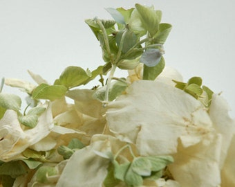 Ivory Rose Petals & Green Hydrangea Freeze Dried - 5 cups
