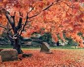 Nature Photography, Fall Photograph, Autumn Leaves, Rustic Decor, Fall Foliage, Pumpkin Orange Tree, Vibrant Leaves, 8x12, 12x18 - Ablaze