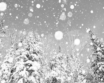 Snow photography, sepia, winter photo, snowy forest, black and white, snowflake, white wedding, fir tree