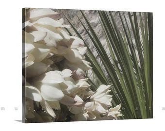 Canvas Photography, Yucca, Nature Photography, Floral Art, Green Agave, Canvas Print, Wall Print, Ready to Hang, Gallery Wrap, Desert Flower
