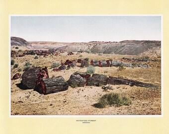 1927 Print of the Petrified Forrest, Arizona. FREE U.S. SHIPPING