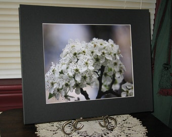 Matted, Spring, Blooming, Bradford Pear, Tree, Fine Art, Photography, Print, 8 x 10 Glossy, OOAK