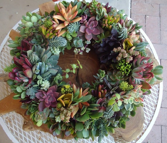 Succulent Wreath, Featured in Birds and Blooms and Phoenix Magazines, Etsy Featured Seller, 14""
