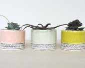 Pinched Porcelain Cup Planter  with Herringbone - Made to Order