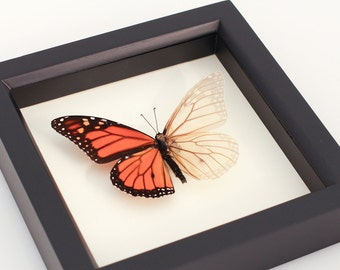 Real Monarch Butterfly Skeleton Science Oddity Curiosity