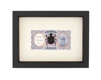 Scarab Beetle with Egyptian Currency Insect Display