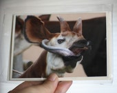 Photo greeting cards.Set of two with envelopes. Funny animal