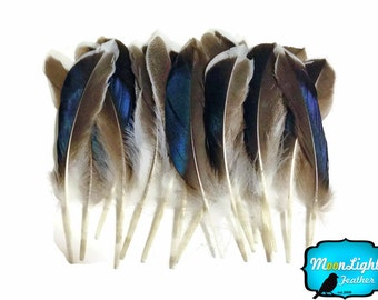 USA Real Feathers, 1 Pack - Iridescent BLUE MIX Mallard Duck Wing feathers 0.15 oz. : 3569