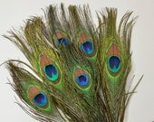 6pcs - Natural Peacock Feathers