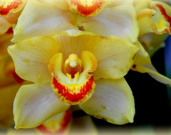 ACEO - Yellow and Orange Orchid