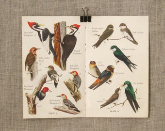 Antique Bird Watchers Book Plate, Guide, Aviary, Natural History, Illustration, Woodpecker, Owls, Double Page, Art and Craft Supply,Ephemera