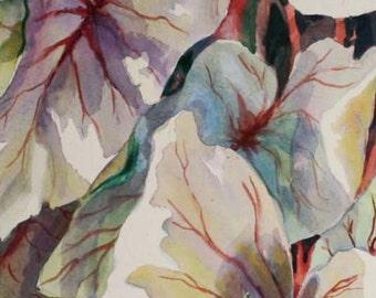 Caladiums I ACEO watercolor Print  Garden 740 handmade red watercolorsNmore