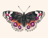"Pink & Orange Butterfly - Archival Print from my Original Watercolor Illustration - 8""x10"", 5""x7"", 9""x12"" or 11""x14"" Natural History Art"