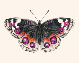 Butterfly Art Print - Butterfly Wall Art - Giclee Print - Pink & Orange Butterfly - Large Wall Art